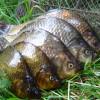 І знову про рибу