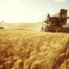 Аграрії Хмельниччини намолотили понад 2 млн тонн зерна