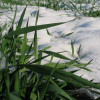 Більшість озимих зернових Хмельниччини – у доброму стані