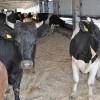 За останні три роки у сільському господарстві Хмельниччини мінімальний ріст – лише 0,1%