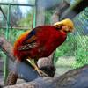 Хмельницький зоокуток: мале ведмежа за день з'їдає продуктів майже на 100 грн