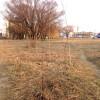 У Хмельницькому приживається лише 8-10% нових зелених насаджень