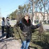 В Славуті висадили 260 троянд