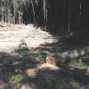 На Хмельниччині тривають лісові рейди: у Лисівці виявлено суцільну рубку дубів