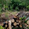 На Красилівщині незаконно повалили лісу на понад 2 млн. грн