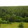 50 гектарів на 50 років: хто контролює ліси Хмельниччини