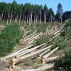 На Хмельниччині держпідприємство НААНУ за рік незаконно нарубало лісу на 7,3 млн. грн