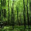 Губернатор Хмельниччини передав у користування 18 га лісу фірмі екс-помічника Лабазюка