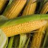 """Фірму екс-депутата облради використали """"прокладкою"""" для прокачування мільйонів за кукурудзу"""