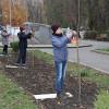 Через чотири роки, як у Хмельницькому зникли сакури, їх висадили уже в іншому парку