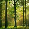 25 соток хмельницького лісу виділили фірмі киянки