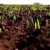 Хмельницька область скоротила площі посіви озимих під урожай-2018