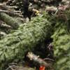 Хмельничанам порадили, що робити з використаними новорічними ялинками