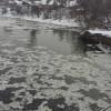 Екологи Хмельниччини намагаються встановити, хто забруднив річку Хомору