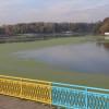 У Хмельницькому русло річки Південний Буг почистять за 2,48 млн грн