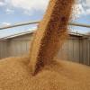 У Хмельницькій області вал зібраного зерна перевалив 3 млн тонн