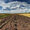 Нардепи від Хмельниччини дружно підтримали продовження земельного мораторію