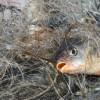 На Хмельниччині у бракон'єрів вилучено 2 тонни риби