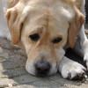Тендер з будівництва притулку для тварин у Хмельницькому провалився