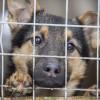 Хмельницькі комунальники розіграли 15 млн грн на будівництво центру поводження з тваринами