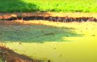 У парку імені Чекмана почистять озеро, що біля зоокуточка