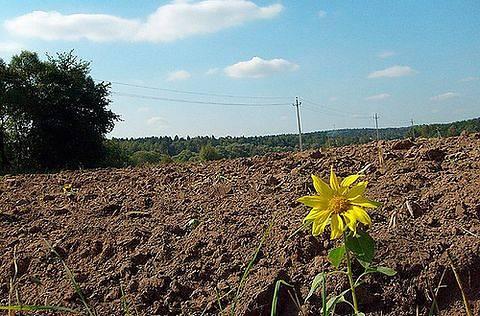 Фото agrodovidka.info