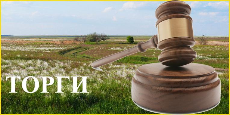 За право користуватися земельною ділянкою у Голопристанському районі запропоновано орендну ставку у 14,5 разів вищу за стартову